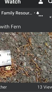 Measuring Ants