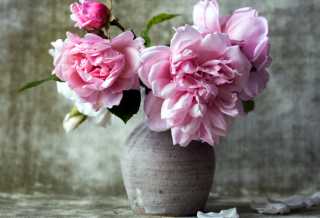 A vase with large pink flowers.