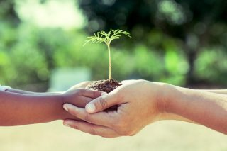 A child's hands holding a seedling, cradled by an adult's hands.