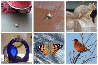 A child observing a snail on a table, a close-up of a snail, a squirrel, a caterpillar in a screened house, and a bird on a branch.