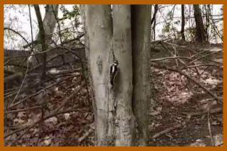 A chickadee on a tree